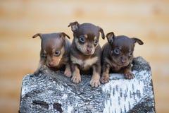 3 прелестных щенят outdoors Стоковое Изображение