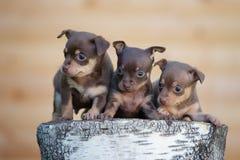 3 прелестных щенят outdoors Стоковая Фотография