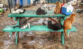 предметы животной семьи характеров котов шаржа смешные изолированные Стоковые Фотографии RF