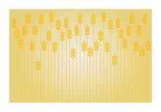предметы собранные предпосылкой изолированные над белизной пшеницы Стоковая Фотография
