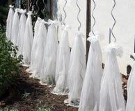 Предохранение от зимы саженцев томата Стоковое фото RF