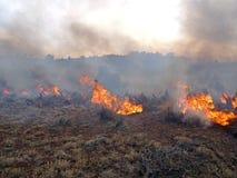 Предписанный огонь стоковое изображение rf