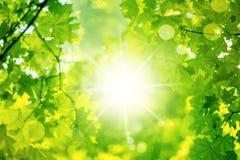 Предпосылка весны природы Стоковые Фотографии RF