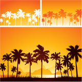 Предпосылка захода солнца лета с пальмами Стоковая Фотография