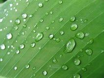 предпосылка органическая Стоковое Фото