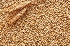 Предпосылка пшеницы Стоковое Изображение