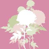 предпосылка цветет peon Стоковые Изображения RF