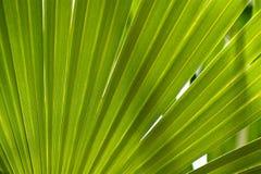 Предпосылка джунглей Стоковые Фотографии RF