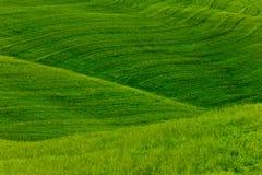 предпосылка fields зеленый цвет Стоковые Изображения