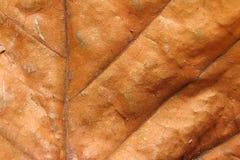 предпосылки сушат текстуру листьев Стоковое фото RF