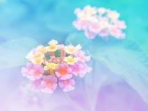 Предпосылка абстрактного расплывчатого цветка Lantana (Phakakrong цветет в тайском) красочная Стоковая Фотография RF
