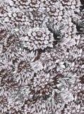Предпосылка акварели абстрактная флористическая с красочными красивыми цветками Стоковые Изображения