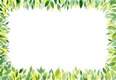 Предпосылка акварели зеленая с листьями Стоковые Изображения