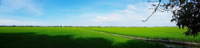 Предпосылка ландшафта облака голубого неба зеленой травы поля риса пасмурная стоковое изображение