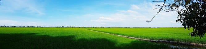 Предпосылка ландшафта облака голубого неба зеленой травы поля риса пасмурная стоковое фото rf