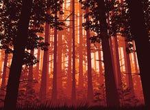 Предпосылка ландшафта с глубоким лесом Стоковое Изображение