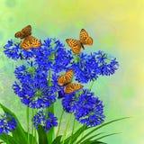 Предпосылка африканской лилии флористическая Стоковые Изображения RF