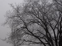 Предпосылка безлистного дерева в черно-белом Стоковые Изображения