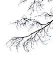 Предпосылка белизны ветви силуэта Стоковые Изображения RF