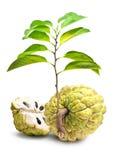 Предпосылка белизны изолята Яблока заварного крема стоковое изображение