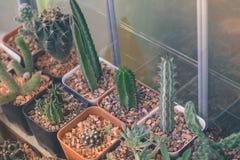 Предпосылка белизны кактуса Стоковое фото RF