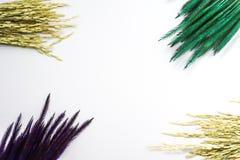 Предпосылка белизны рисовой посадки травы Rye Стоковые Изображения