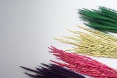 Предпосылка белизны рисовой посадки травы Rye Стоковая Фотография RF