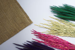 Предпосылка белизны рисовой посадки травы Rye Стоковые Фото