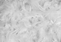 Предпосылка белого пера Стоковое Фото