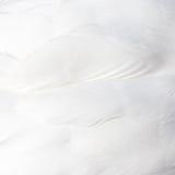 Предпосылка белых пер лебедя Стоковое Изображение RF