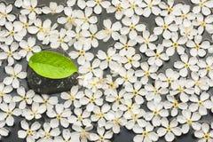 Предпосылка белых цветков и черного камня с зелеными лист в t Стоковое Изображение RF