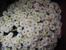 Предпосылка белых цветков конца-вверх Стоковые Изображения RF