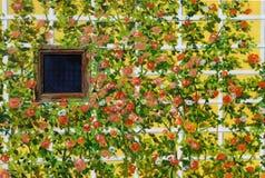 Предпосылка бумаги стены Стоковые Изображения