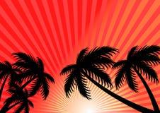 Предпосылка вектора лета захода солнца стоковые изображения rf
