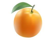 Предпосылка вектора изолированная апельсином Стоковые Изображения