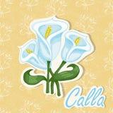 Предпосылка вектора с цветком Иллюстрация чертежа руки Calla Стоковые Изображения