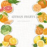 Предпосылка вектора с цитрусовыми фруктами Стоковое Изображение