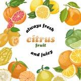 Предпосылка вектора с цитрусовыми фруктами Стоковое Фото
