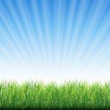 Предпосылка вектора травы краба Стоковое Фото