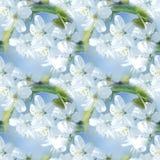 Предпосылка весеннего времени безшовная Ветви яблони или вишни весны красивые blossoming Стоковое фото RF