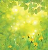 Предпосылка весны вектора с желтыми одуванчиками. иллюстрация штока