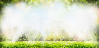 Предпосылка весны или природы лета с деревьями и лужайкой Стоковое Изображение