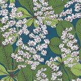 Предпосылка весны каштана цветения безшовная Стоковая Фотография RF