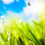 Предпосылка весны конспектов стоковые изображения rf