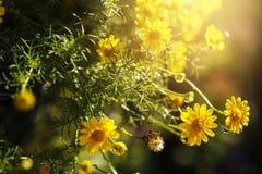 Предпосылка весны, маленькие желтые цветки Стоковые Фотографии RF