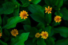 Предпосылка весны, маленькие желтые цветки Стоковые Изображения