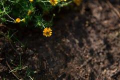 Предпосылка весны, маленькие желтые цветки Стоковое Фото