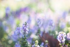 Предпосылка весны, маленький фиолетовый цветок Стоковые Фотографии RF