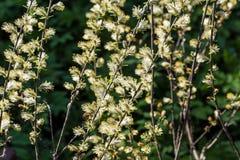 Предпосылка весны нежная с blossoming catkins вербы Стоковая Фотография RF
