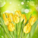 Предпосылка весны пасхи 10 eps Стоковая Фотография RF